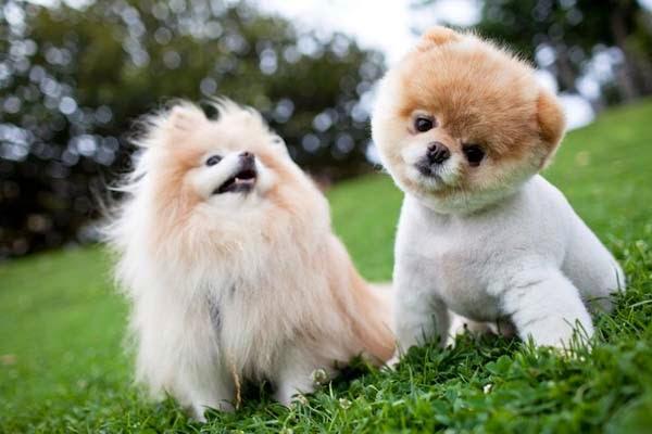 due cuccioli