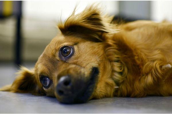 Cani e brodo di pollo: quando è utile darglielo (e come)