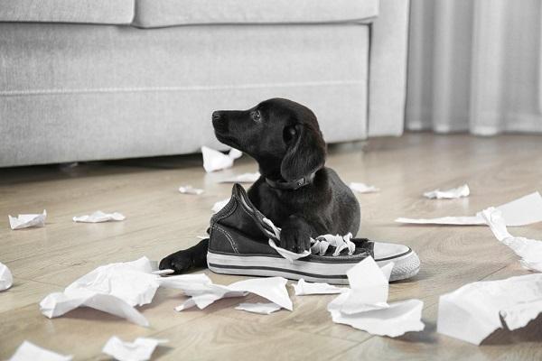cane che mangia la carta