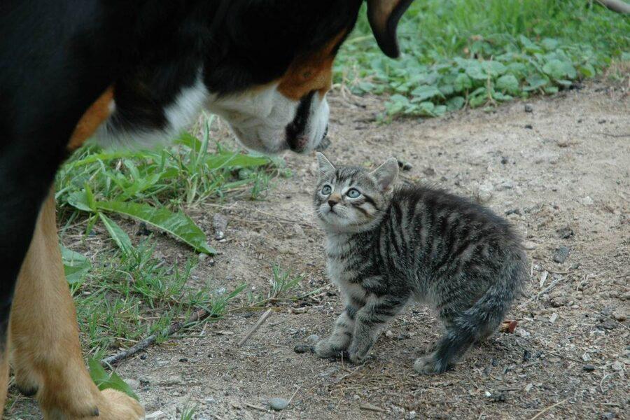 gattino spaventato da un cane