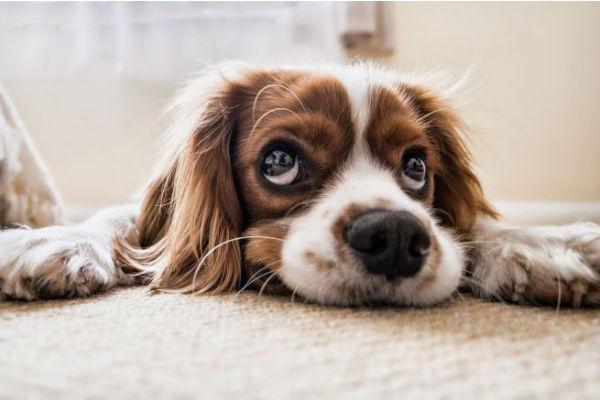 Cani e prodotti per la pulizia: quali tenergli assolutamente lontani