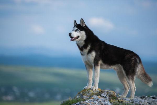 10 razze di cani per chi ama l'avventura: i compagni migliori