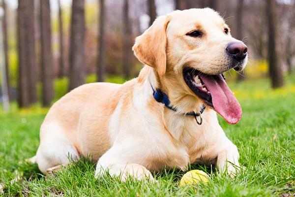 Razze di cani per padroni inesperti: quelli adatti per la prima volta