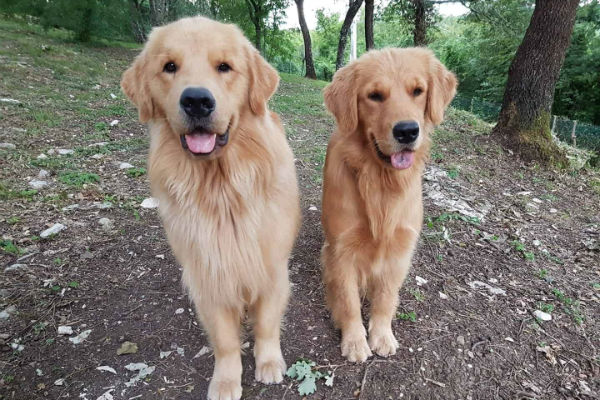 cani in piedi