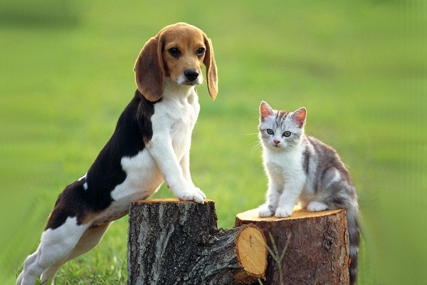 i cani capiscono gli atri animali?