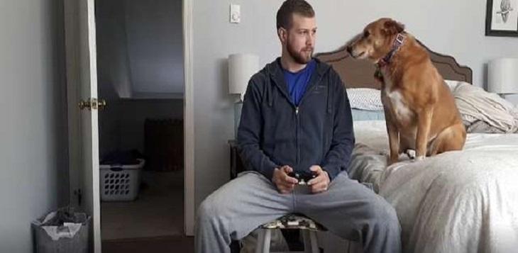 Il cane ricorre a qualsiasi mezzo pur di ottenere l'attenzione del ragazzo