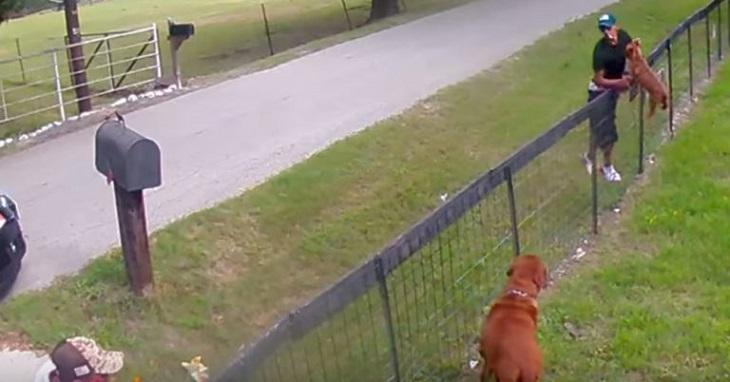 Dei cani vengono rubati, fortunatamente le telecamere registrano il furto