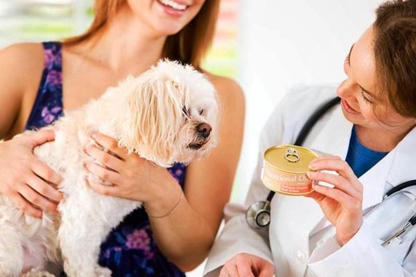 5 modi per rendere felice il cane dal veterinario, senza stress