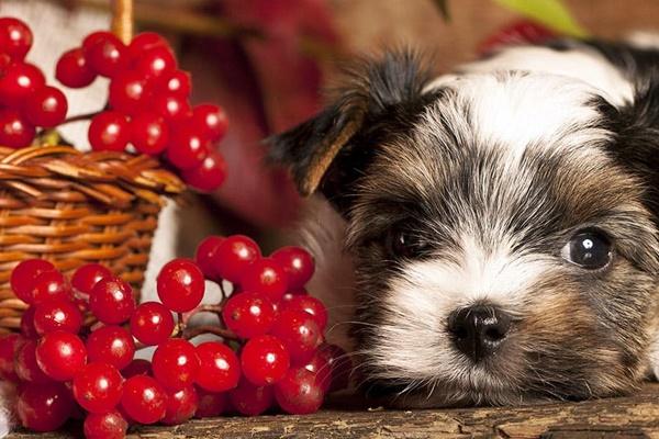 Cibi per i denti dei cani: quelli che fanno bene e li mantengono luminosi