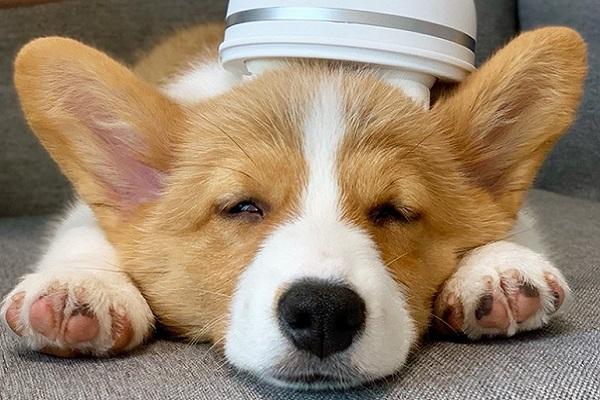 Coccolapet per cani, che cos'è? Un accessorio rilassante per Fido