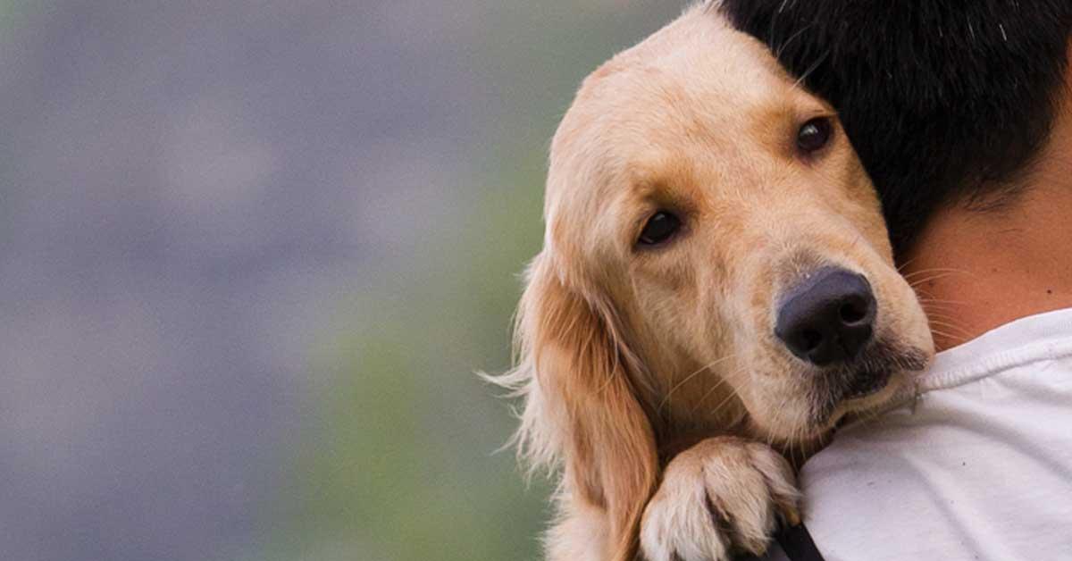 cane non si sente bene