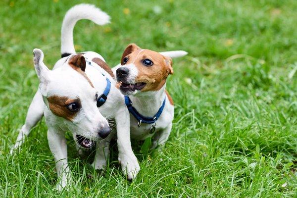 4 comportamenti fraintendibili del cane che hanno un senso diverso