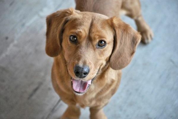 Comportamento della cagnolina sterilizzata: le cose da sapere