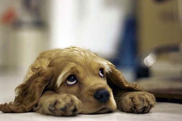 Trucchi e consigli di primo soccorso per il cane