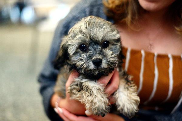 10 consigli per il cane solo a casa (in tutta sicurezza)