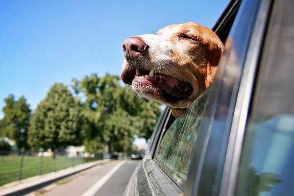 Fido a bordo: perché usare i copri sedili auto per cani