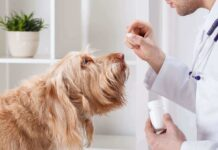 cane prende le medicine