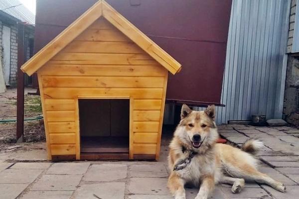 cuccia per cane di taglia grande