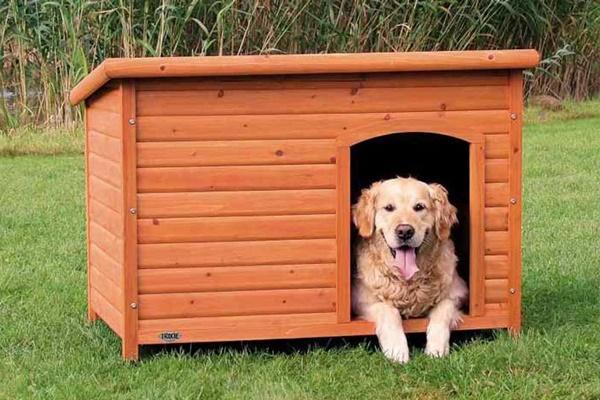 cane felice dentro la sua cuccia