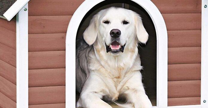 cane dentro cuccia