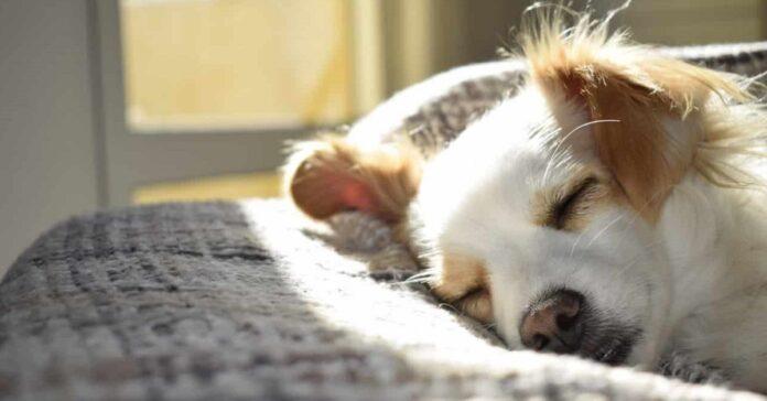 creare uno spazio per il cane stressato