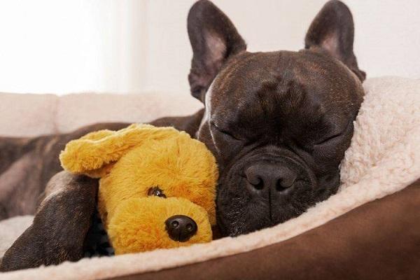 Più comfort per Fido? Basta la cuccia lettino rilassante per cani