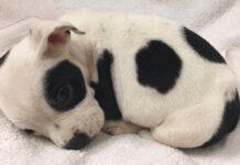 cuccioli-abbandonati-solo-perche-diversi