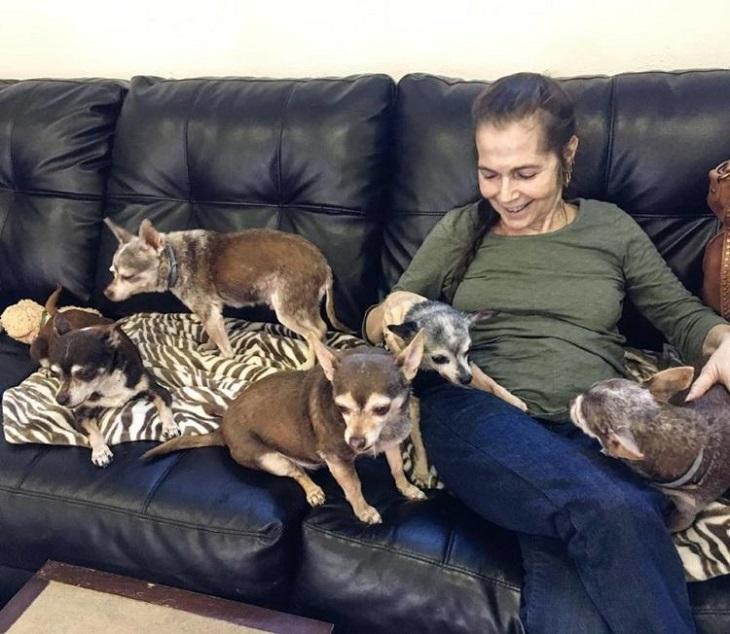 La donna in fin di vita ebbe il tempo di regale un futuro ai propri cani