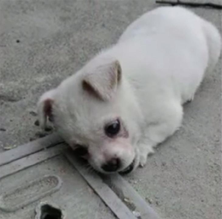 Il cucciolo non vuole allontanarsi dal lato della strada per un solo motivo