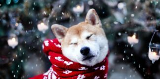 cane con la sciarpa