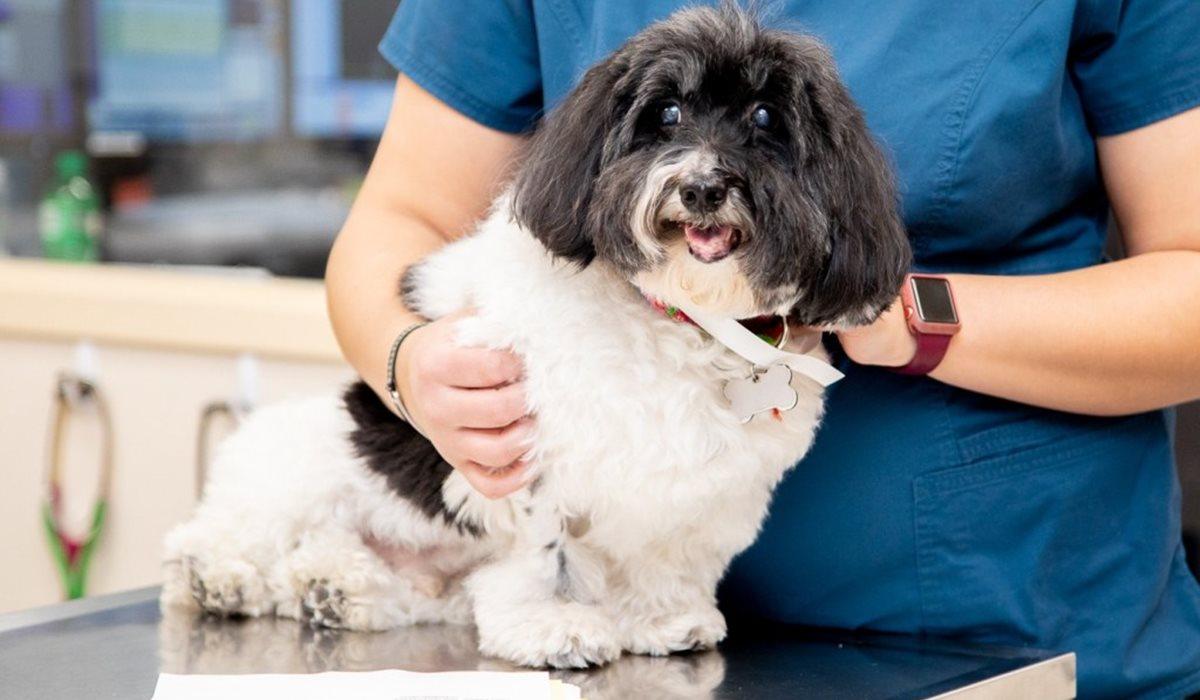cagnolino dal veterinario