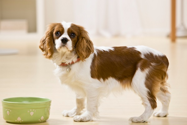 Dieta crudista per il cane: cos'è e in cosa funziona