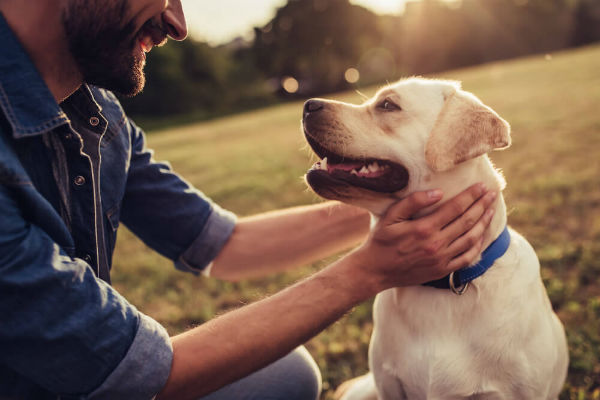 Dieta per cani con il cancro: i nutrienti da dargli