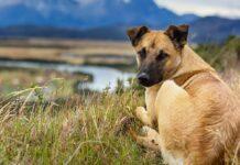 cane che guarda dietro di sé