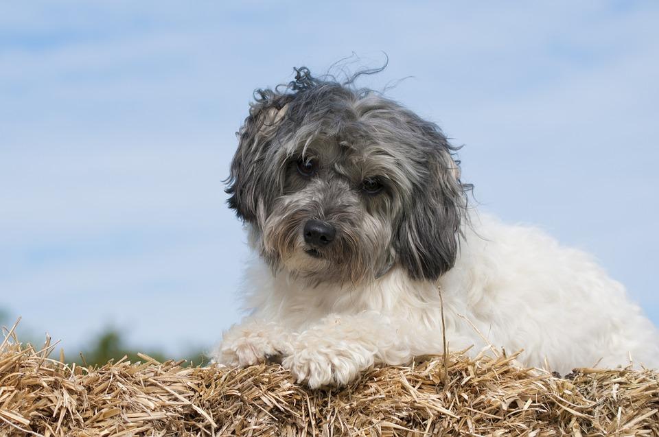 10 razze di cani con origini strane e davvero insolite