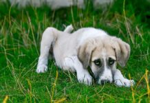 Atresia dell'ano del cane: cos'è? Si cura?Ecco come comportarsi nei casi di atresia dell'ano del cane. Dai sintomi alla cura