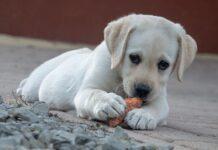 Cani e verdure fermentate: tutto quello che bisogna sapere