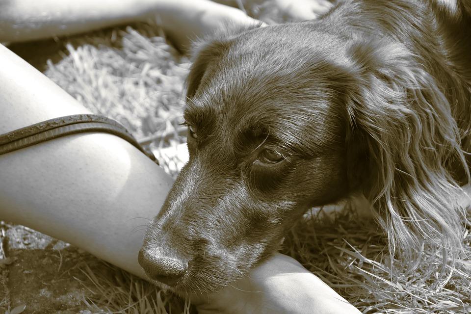 Atresia dell'ano del cane: cos'è? Si cura?