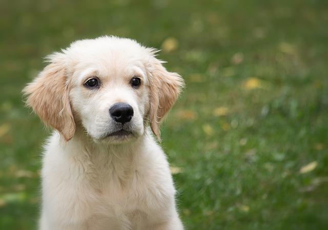 Cani e dolore: come ne sono influenzati e come cambiano