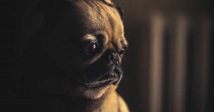 Come stai stressando il cane, senza accorgertene