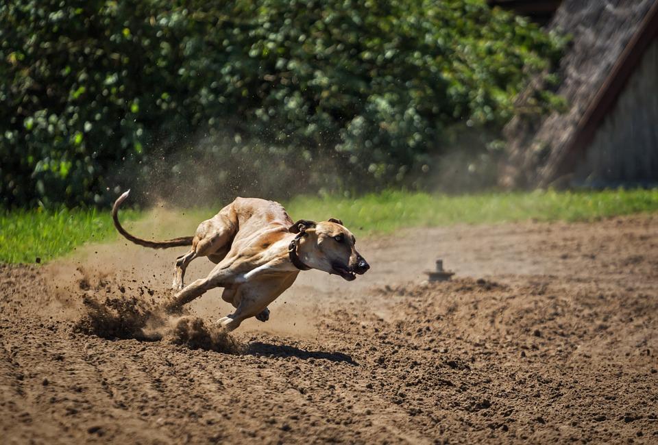 Cani sui 30 kg: quali sono?