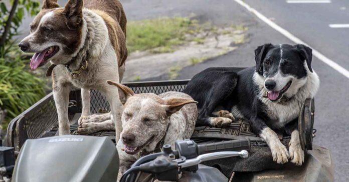 Cucciolata di cani con padri diversi: esiste?