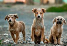 Razze di cani abbandonati spesso: chi si trova nei rifugi (e nei canili)