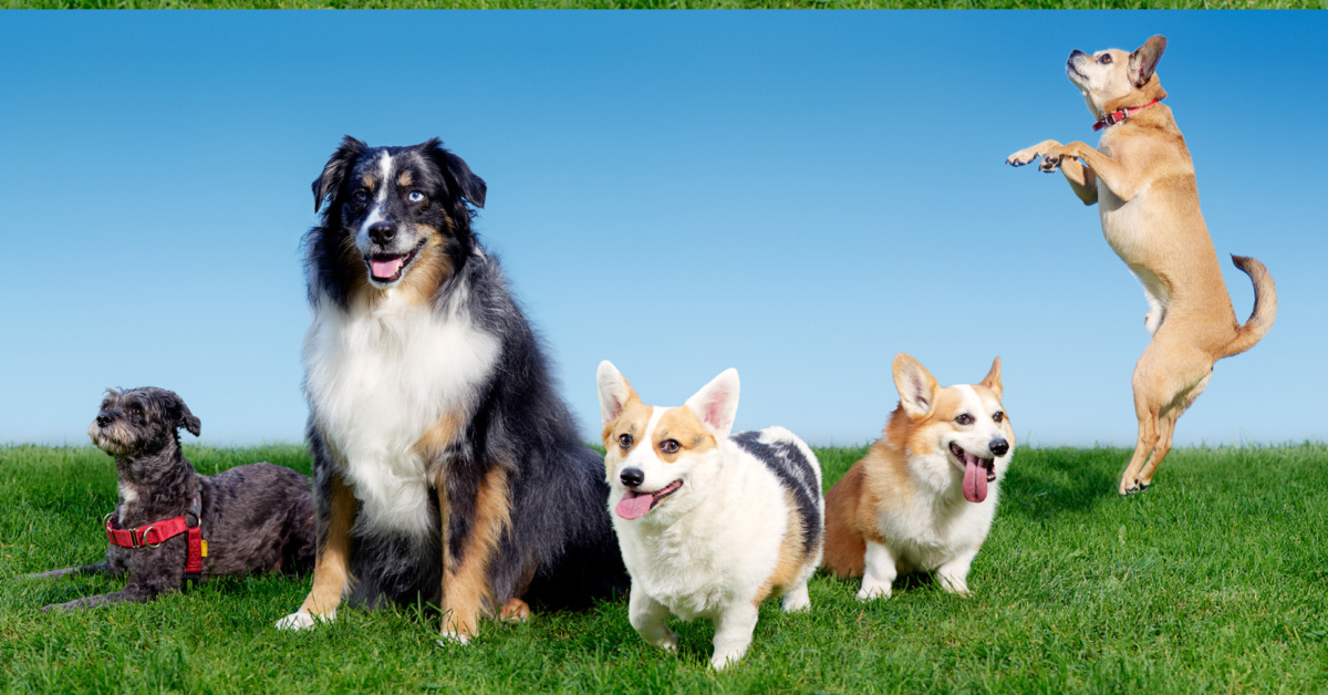 tanti cani