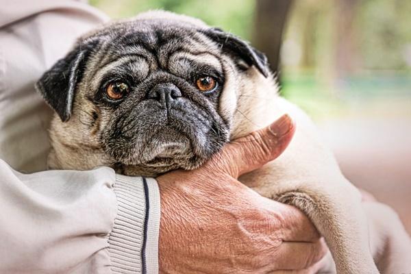 Esercizi per cani anziani: tutti quelli per far stare bene Fido