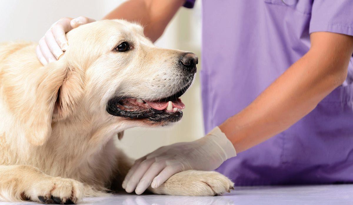 Esofagite nel cane: cos'è, cosa fare e quali trattamenti ci sono