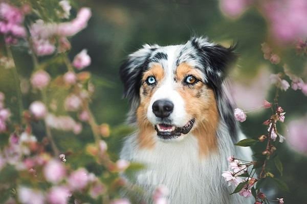 cane tra i fiori