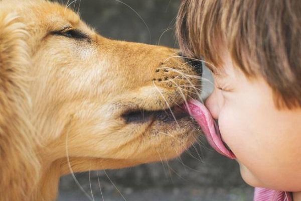 cane lecca faccia
