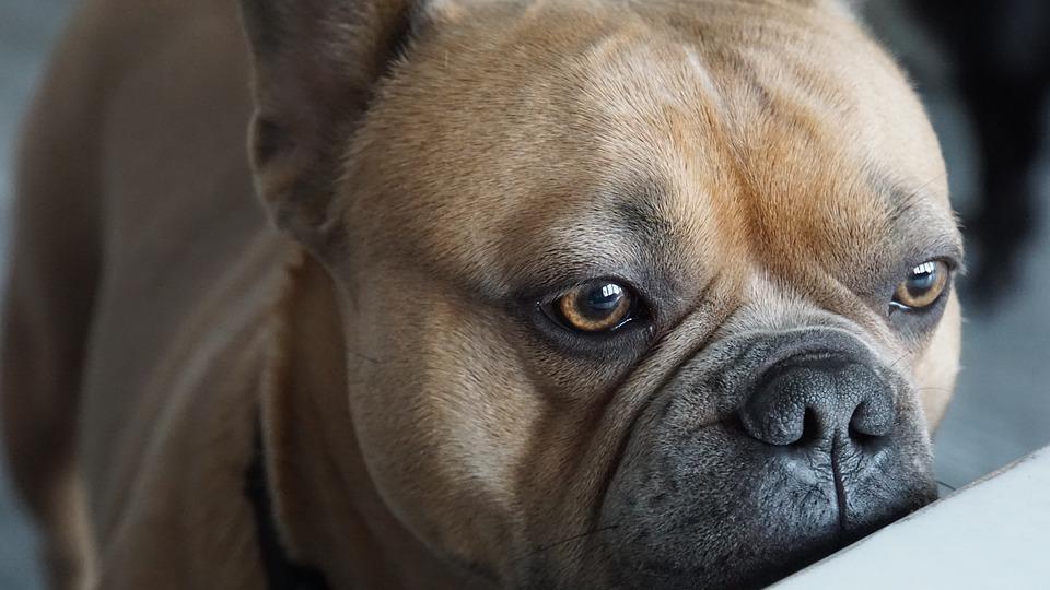 I cani possono mangiare la ricotta?