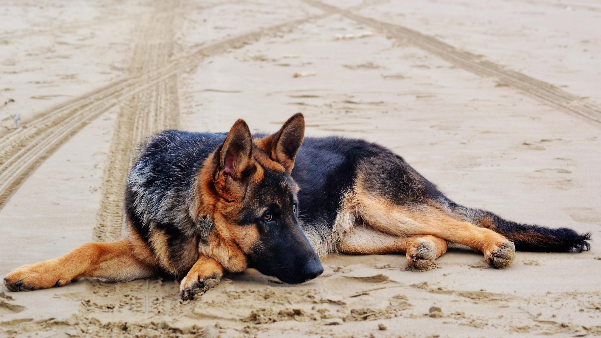 Cinque fantastici trucchi da insegnare al cane
